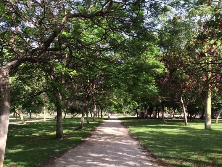 Valencia's Riverbed Park Has Plenty Of Shady Pathways